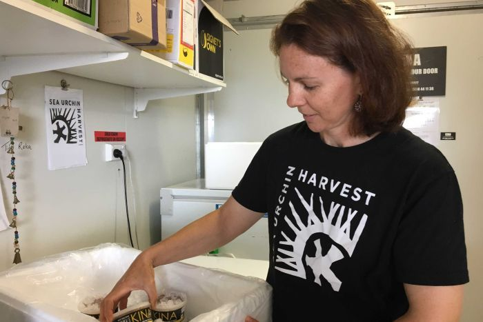 A woman packs small containers of sea urchin products into a chiller box